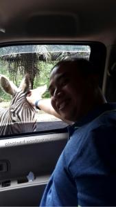 muka girang bisa pegang zebra