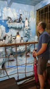 ada yang terkesima sama diorama penguin2